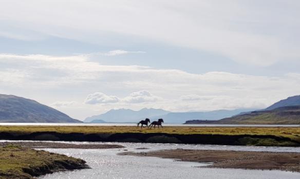 Hestar við Hlíðarvatn