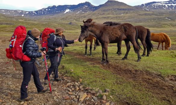 Hestastóð kom að kíkja á okkur