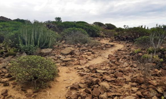 Frá hlaupi Arnars á Tenerife